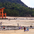 写真: ~宮島(厳島神社)の潮干狩り~~(^^♪
