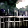 写真: ~fence~