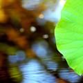 写真: 2)~蓮っ葉のテーマ曲だぜぇ~うへへ~(´-ω-`)