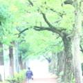 1)~小雨降る散歩道~