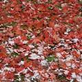 写真: 赤ときどき白