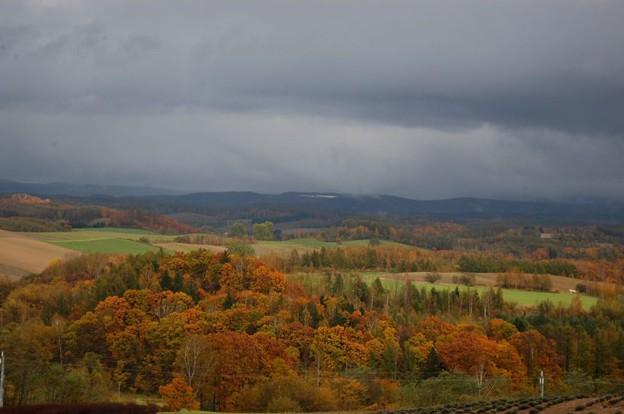 晩秋の丘3
