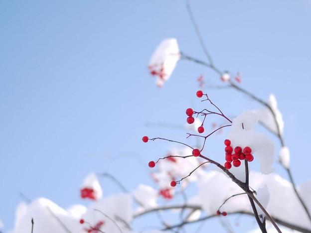 空の青と紅い実