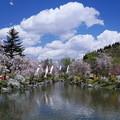 写真: 春盛り