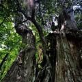 写真: 菩提樹に抱かれて