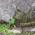 RIMG2291RIMG2290電柱付近漏水2