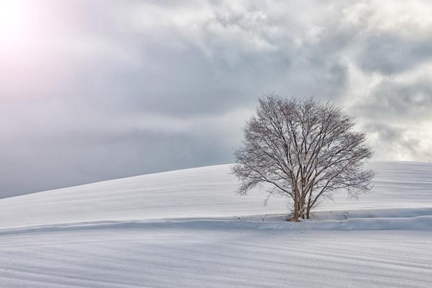 Photos: 美瑛冬の美