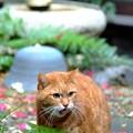 写真: 庭猫1