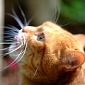Photos: 庭猫4