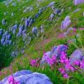 紫蘭の咲く平尾台