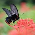 写真: 花から花へと~♪~♪♪~