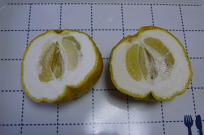 141226-1 獅子柚子の断面