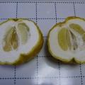 写真: 141226-1 獅子柚子の断面