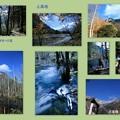 10月の上高地 コラージュ(3) 明神池への道から