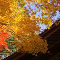 永源寺(1)  山門の紅葉