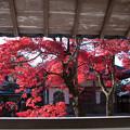 永源寺(4) 紅葉
