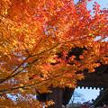 Photos: 金剛輪寺(1) 黒門の紅葉?