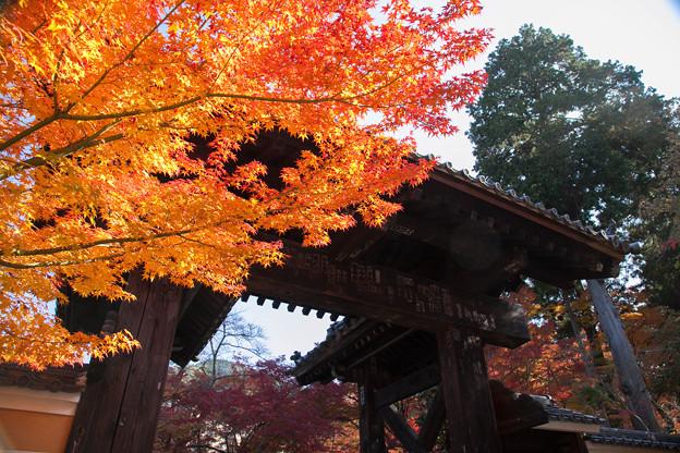 Photos: 金剛輪寺(2) 黒門の紅葉?