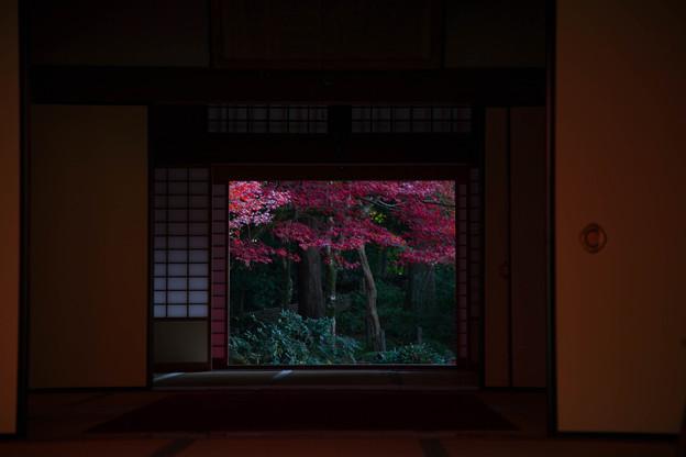 金剛輪寺(3) 紅葉
