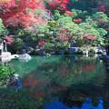 Photos: 百済寺(6) 庭園と池の彩り