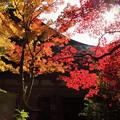 金剛輪寺(6) 本堂とモミジ