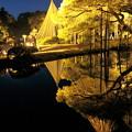 Photos: 黄金の松 曲水に映り込み