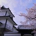 写真: 満開のソメイヨシノ