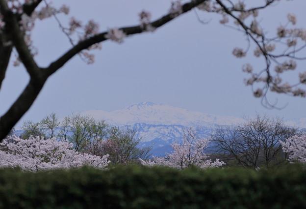 白山と桜のフレーム