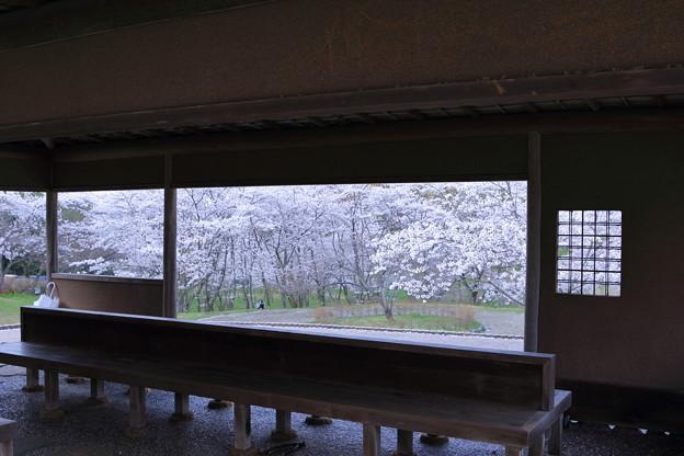 卯辰山四百年の森 東屋