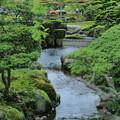 新緑の兼六園 曲水
