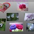 写真: ユキノシタ ヤグルマギク 口紅シラン 薔薇