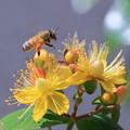 ミツバチさん どれにしようかな?