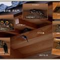 Photos: ツバメの巣と子育て  金沢城 河北門で