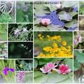 白川郷と白山白川郷ホワイトロードで見かけた花