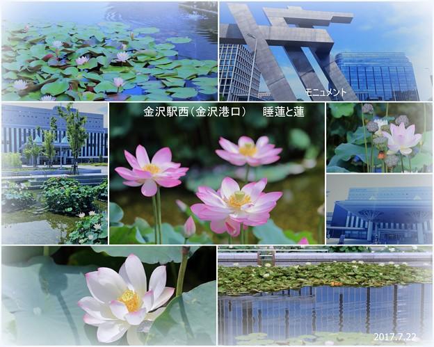金沢駅西(金沢港口)睡蓮と蓮
