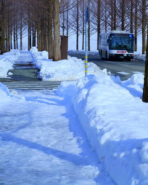 雪のメタセコイアの並木道 バス
