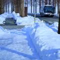 写真: 雪のメタセコイアの並木道 バス