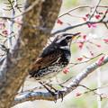 写真: 鳥さん