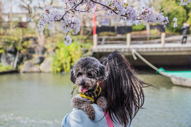 写真: 愛犬