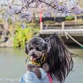 Photos: 愛犬