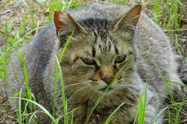 公園の猫・花・RESPO-EMD等
