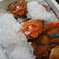 Photos: 紅ズワイ蟹