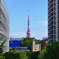 写真: 定番 東京タワー