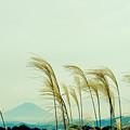 写真: 秋の富士