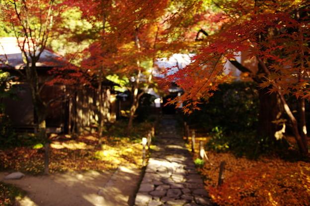 Photos: 洛北蓮華寺