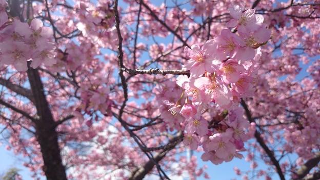 http://art21.photozou.jp/pub/900/3133900/photo/213445550_624.v1414671319.jpg