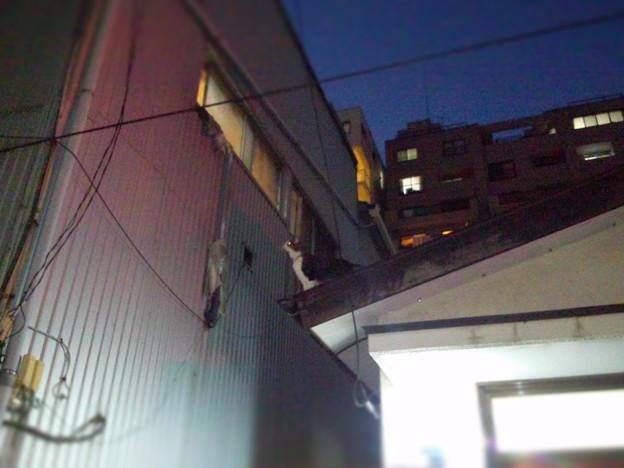 http://art21.photozou.jp/pub/900/3133900/photo/214033339_624.v1415525390.jpg