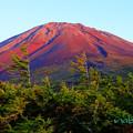 写真: 赤富士