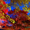 写真: 河口湖紅葉祭り-5