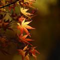 写真: 秋灯り